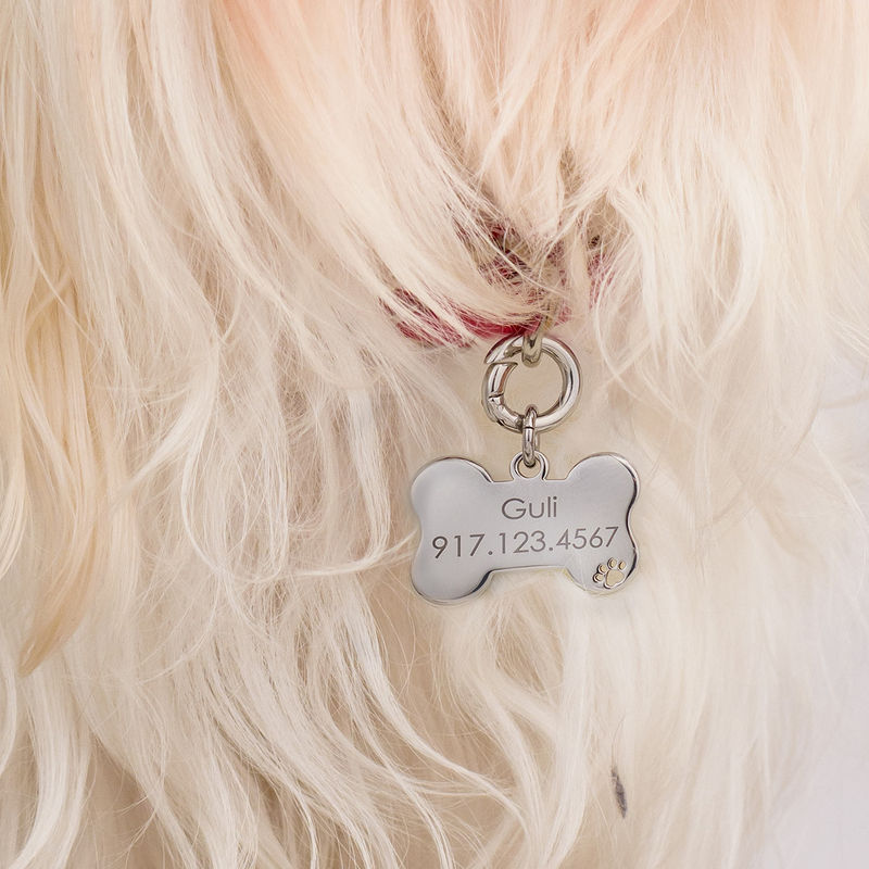Personalized Cat or Dog Id Tag Leather Collar Bone Shaped in Small - 2