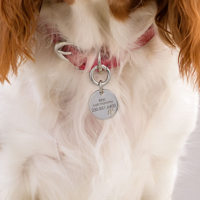 Engraved Cat or Dog Name Tag Leather Collar Round Shaped in Large - 2