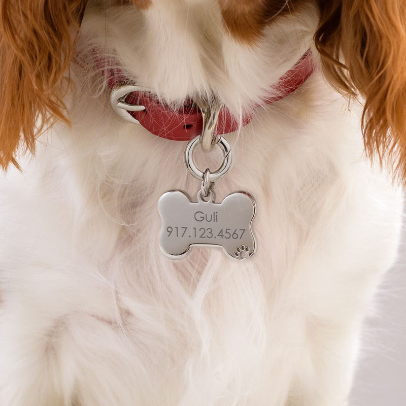 Personalized Cat or Dog Id Tag Bone Shaped - 3